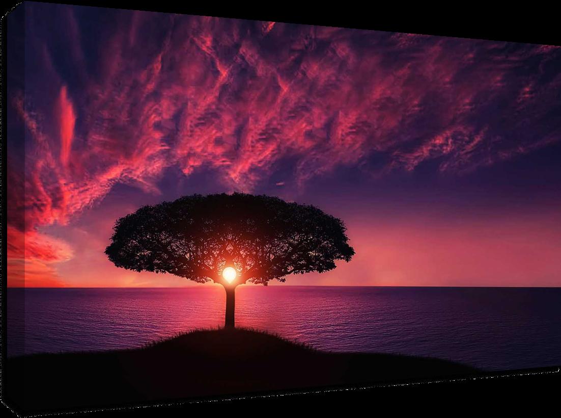 Copacul singurătății- Pepanza.ro