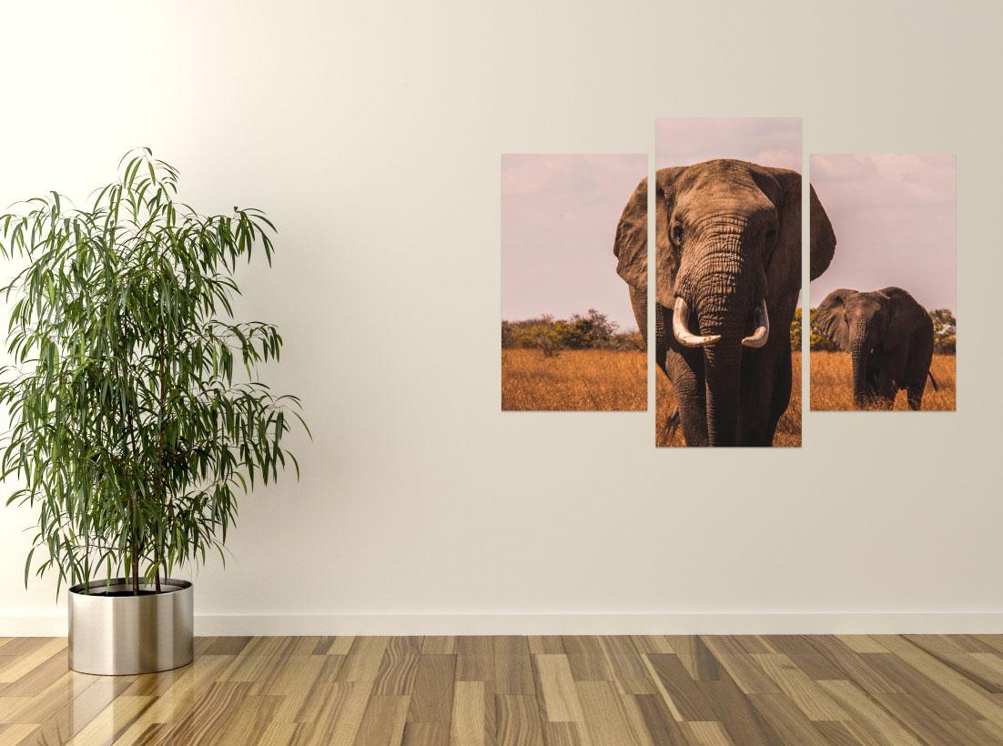 Elefanti- Pepanza.ro