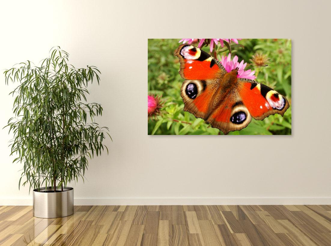 Tablou canvas Fluture colorat - Pepanza.ro