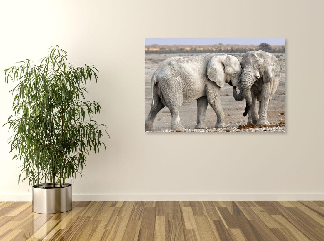 Tablou animale Doi elefanti - Pepanza.ro