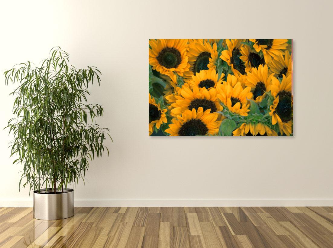 Floarea Soarelui- Pepanza.ro