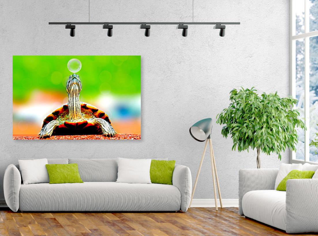 Tablou animale Little turtle - Pepanza.ro