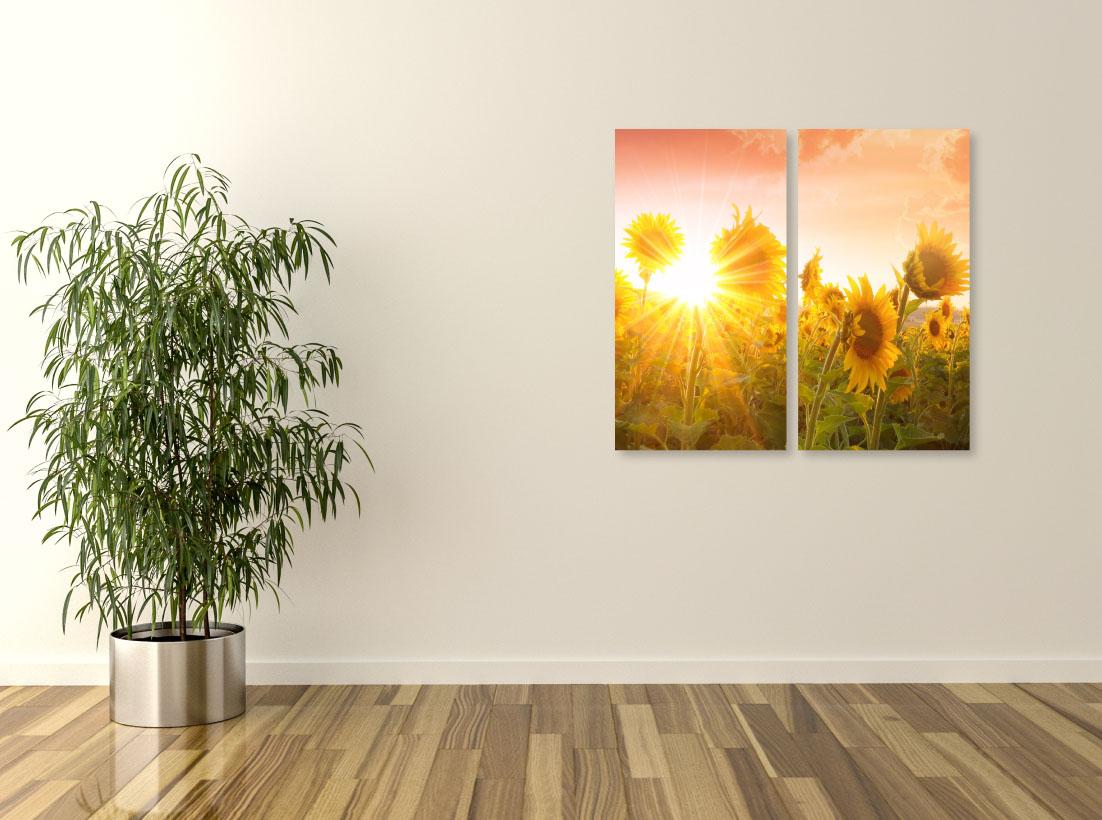 Peisaj Câmp de Floarea Soarelui- Pepanza.ro