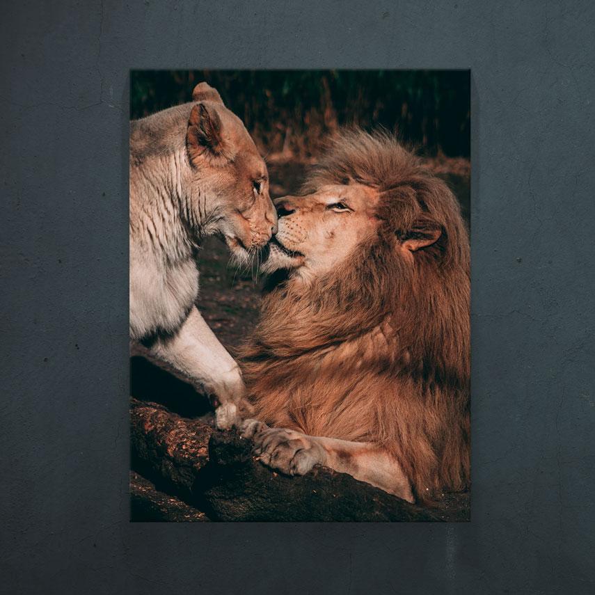 Lovely lions- Pepanza.ro