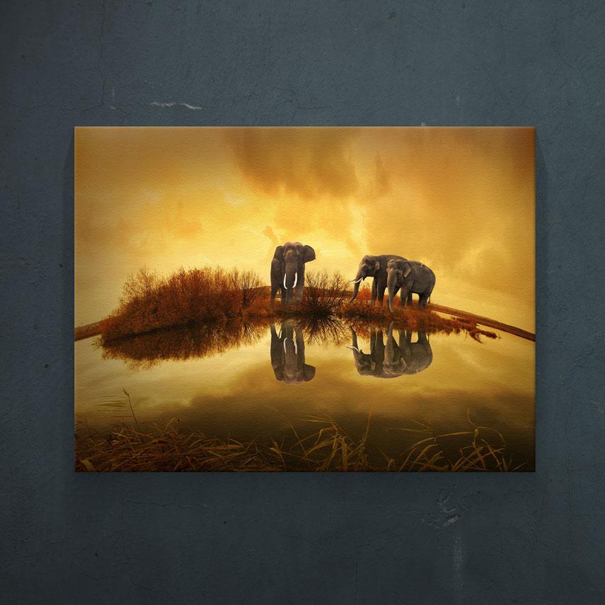 Elephants- Pepanza.ro
