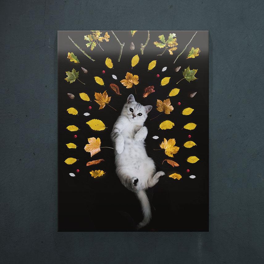 Pisica alba- Pepanza.ro