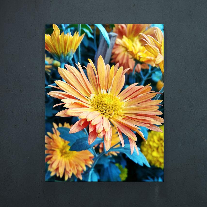 Flori de camp- Pepanza.ro