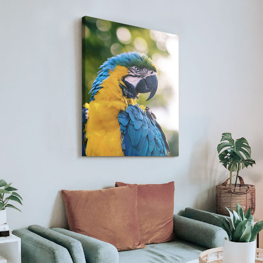 Tablou animale Papagal Colorat - Pepanza.ro