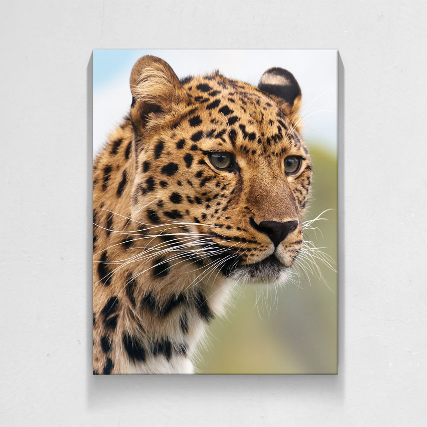 Leopard- Pepanza.ro