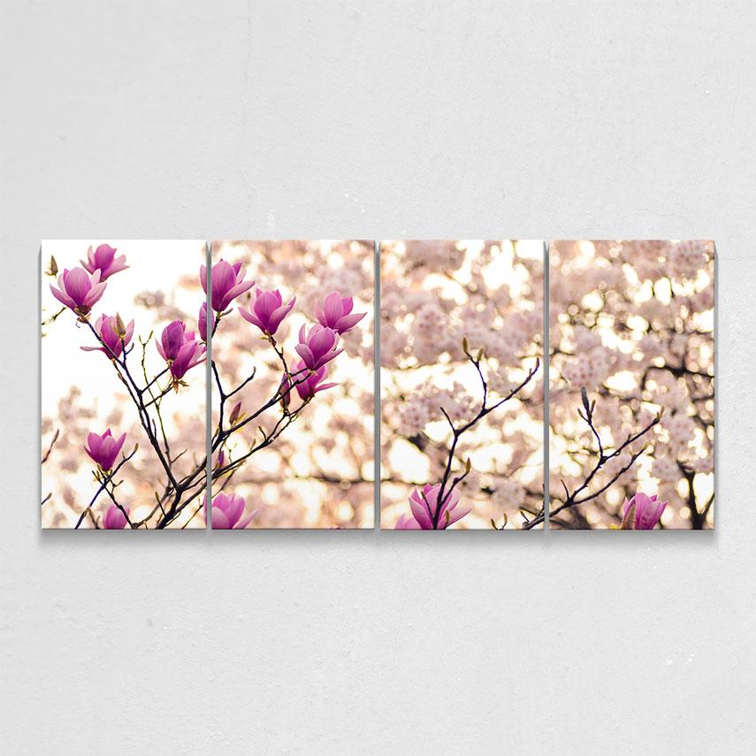 Flori de Magnolie- Pepanza.ro