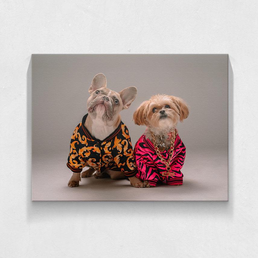Cool dogs- Pepanza.ro