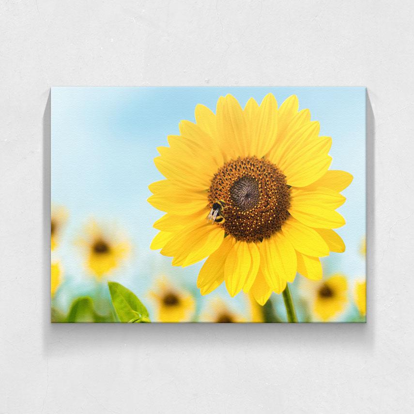 Sunflower- Pepanza.ro