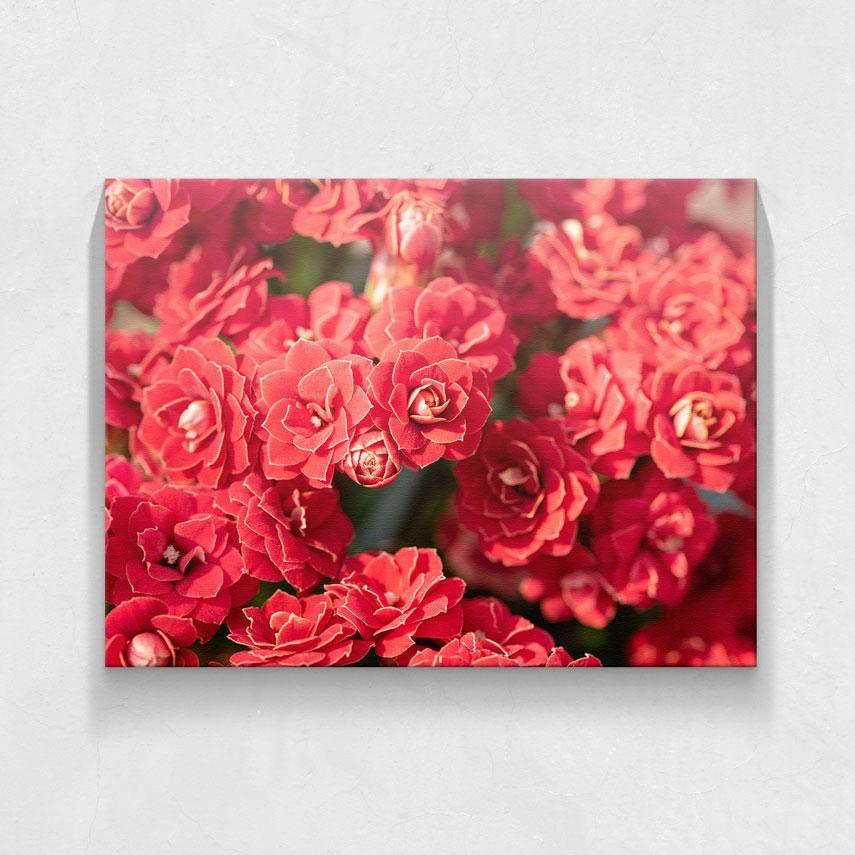 Flori rosii- Pepanza.ro
