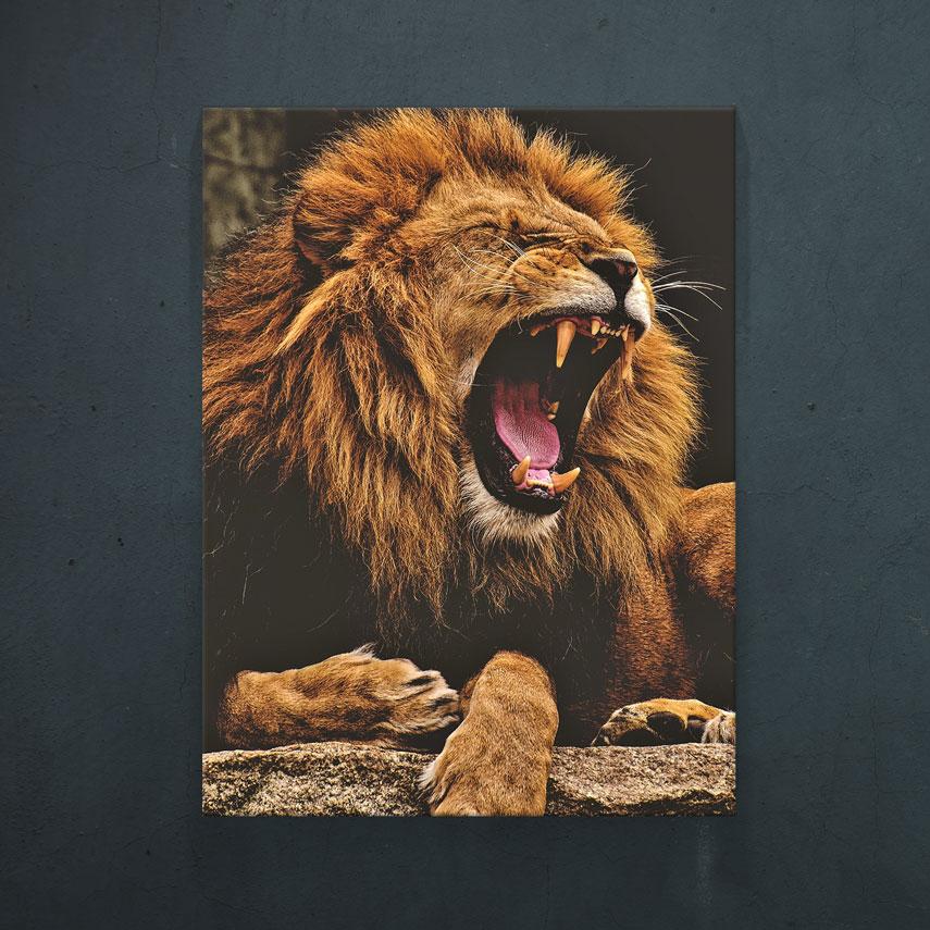 Angry lion- Pepanza.ro