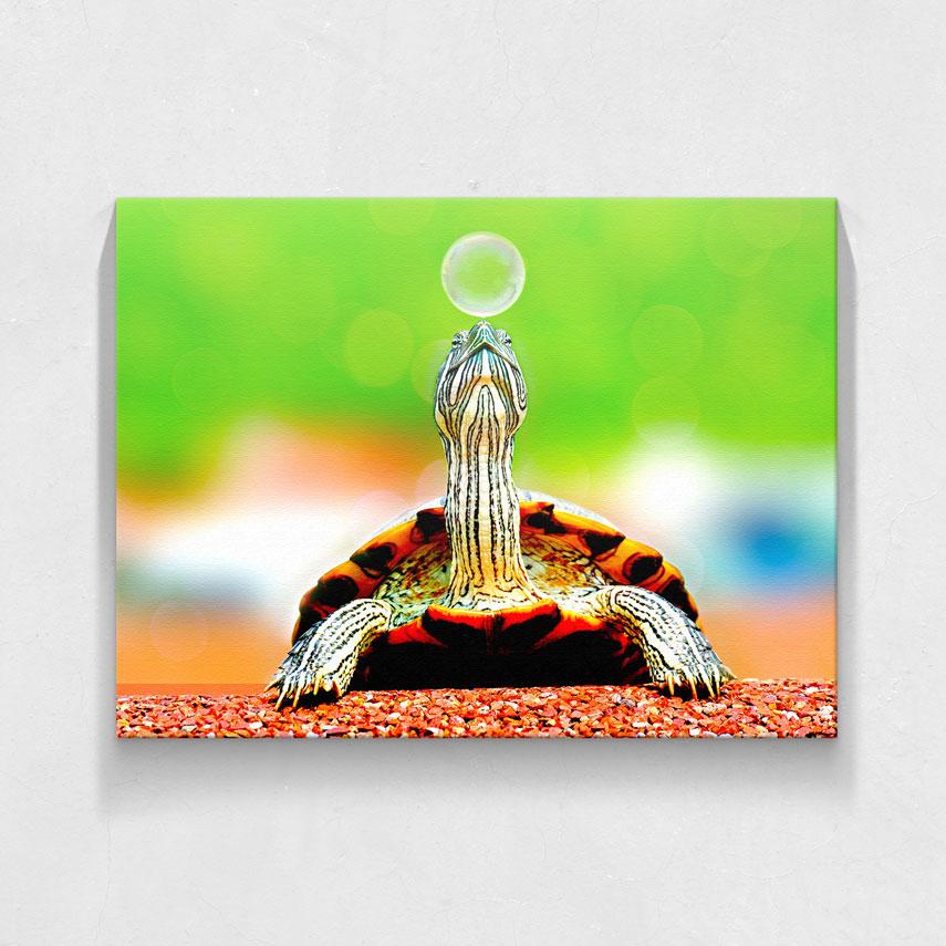 Little turtle- Pepanza.ro