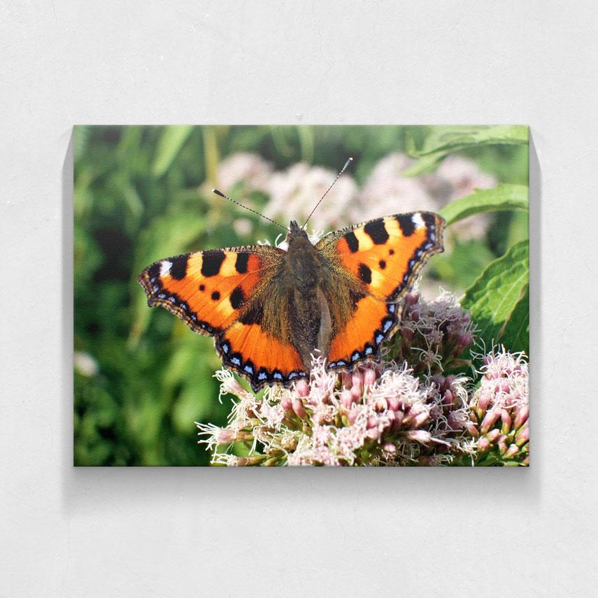 Fluture colorat- Pepanza.ro