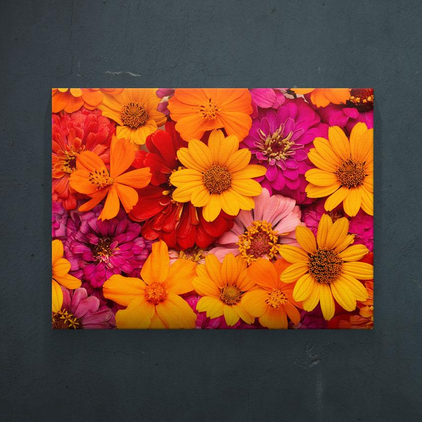 Flori multicolore- Pepanza.ro