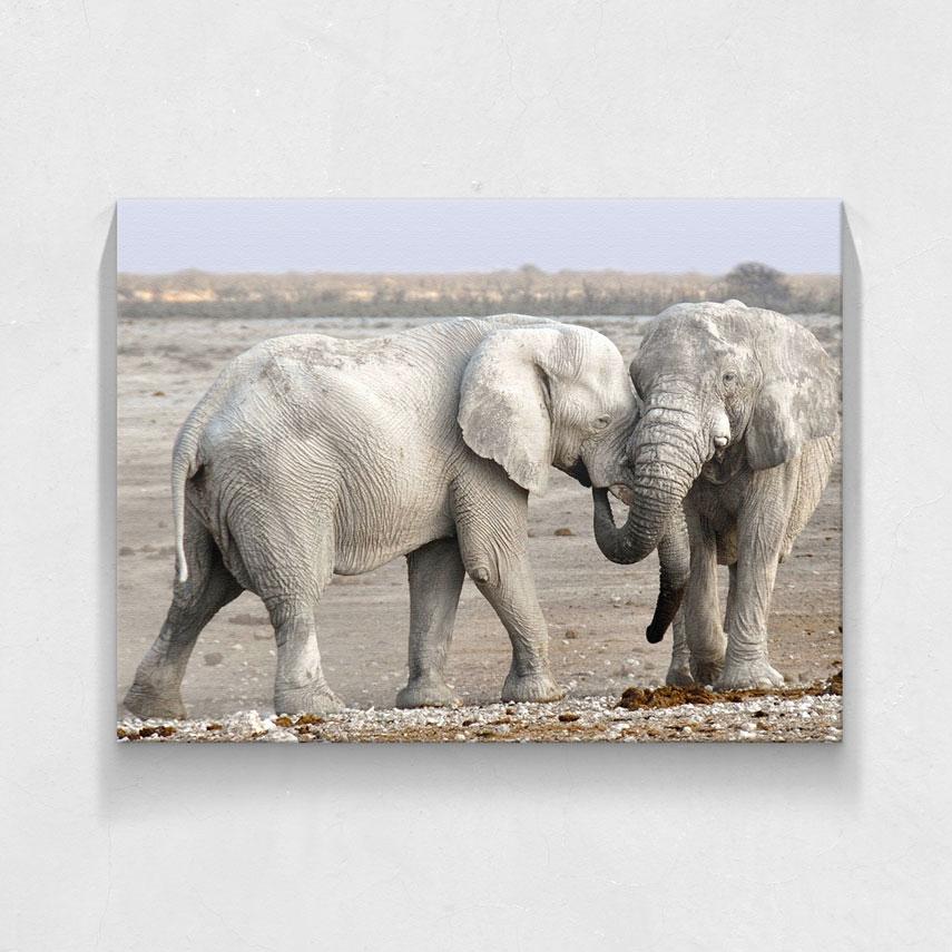 Doi elefanti- Pepanza.ro
