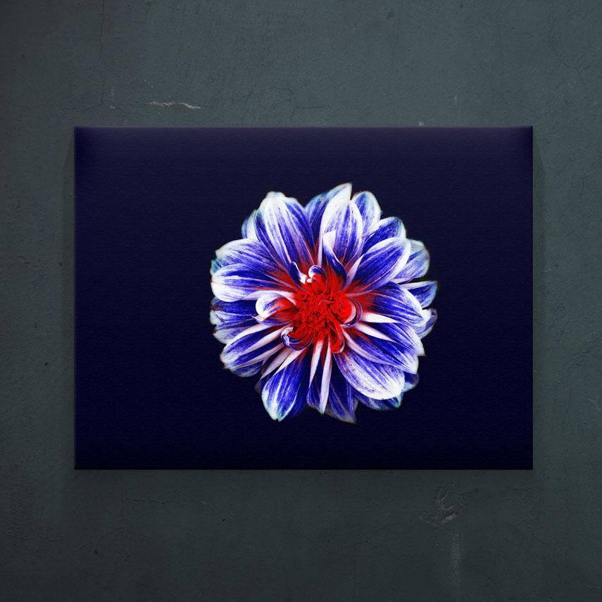 Floare albastra- Pepanza.ro