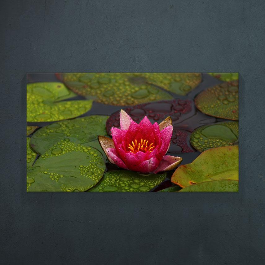 Floare de Lotus- Pepanza.ro