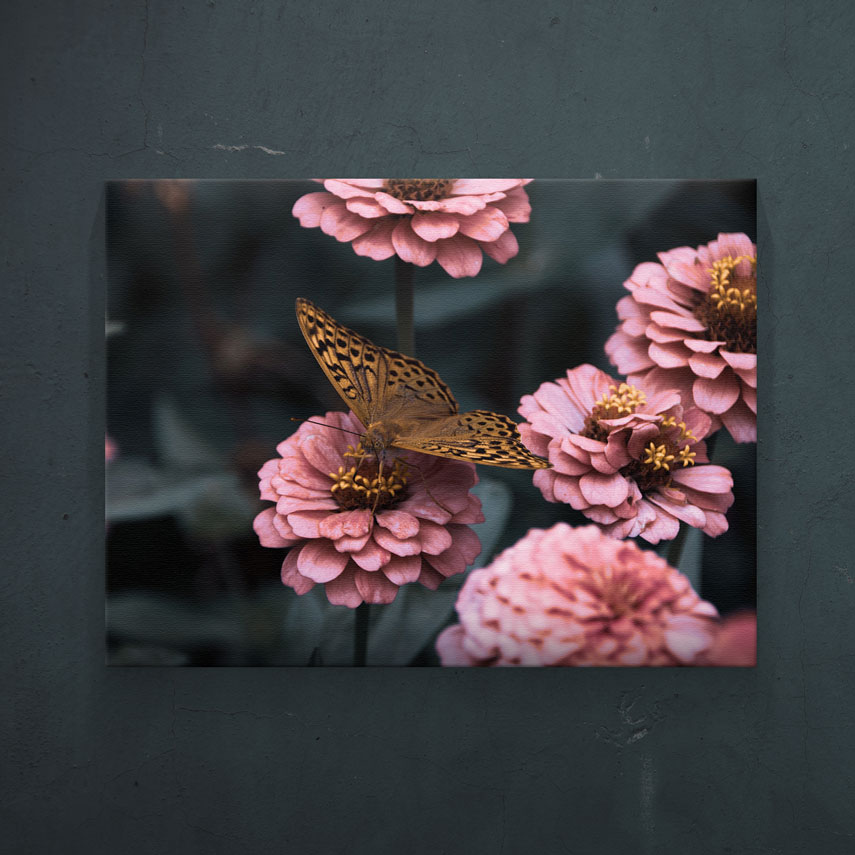 Fluture pe flori- Pepanza.ro