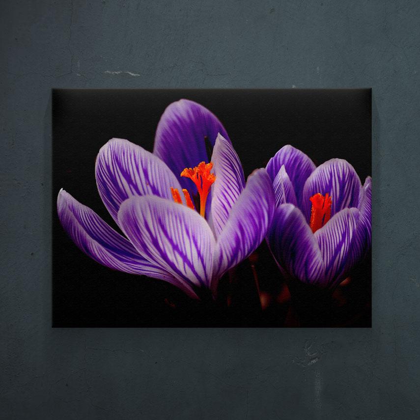 Flori de sofran- Pepanza.ro