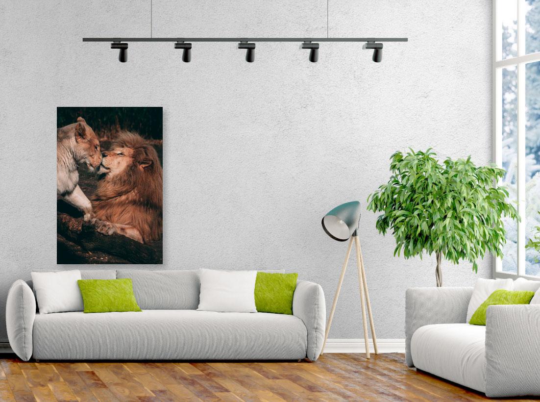 Tablou animale Lovely lions - Pepanza.ro