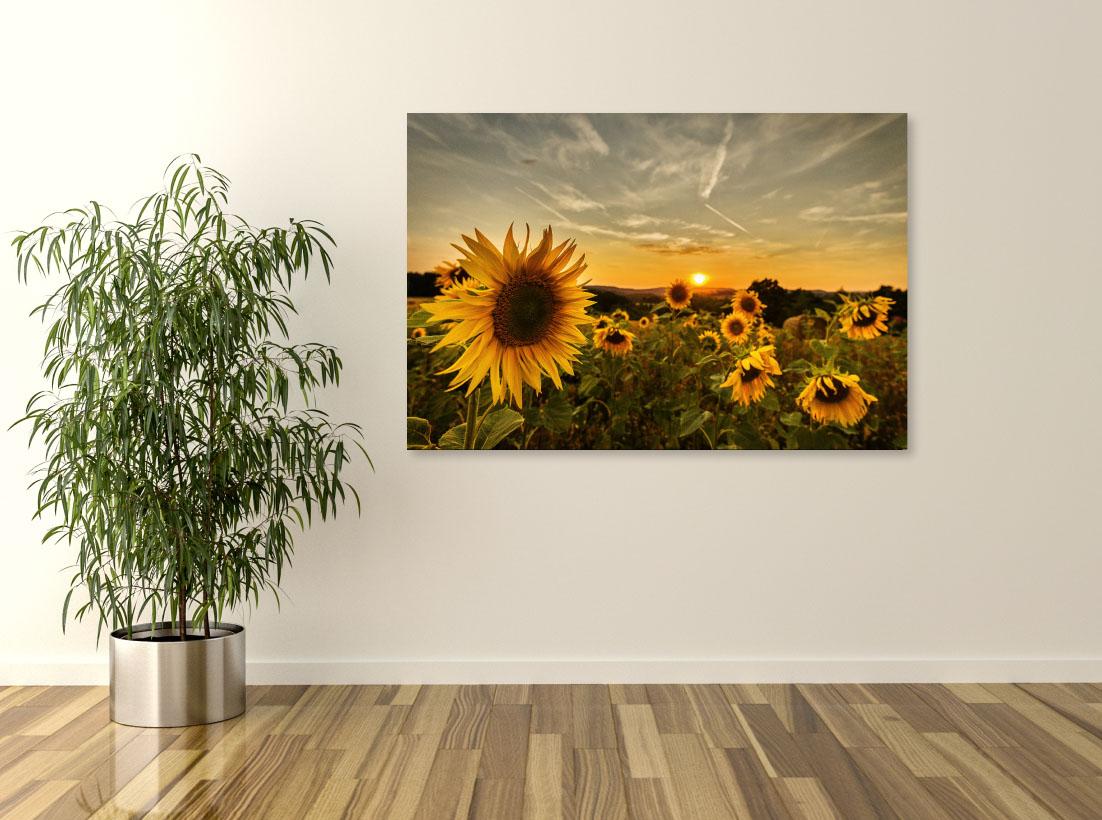 Tablou canvas Peisaj floarea soarelui - Pepanza.ro