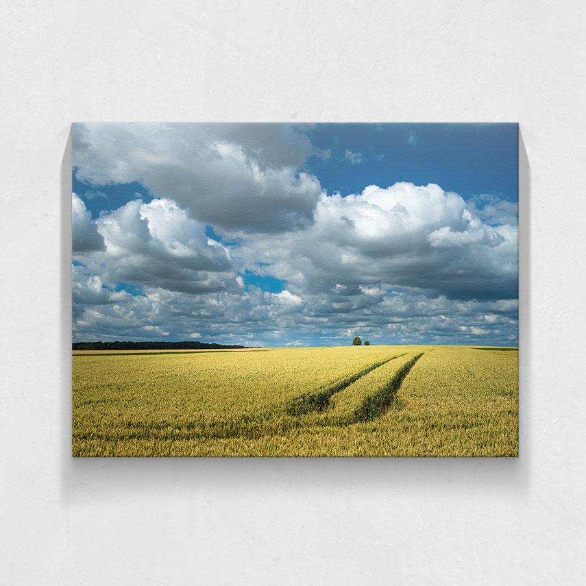 Cer albastru de vară- Pepanza.ro