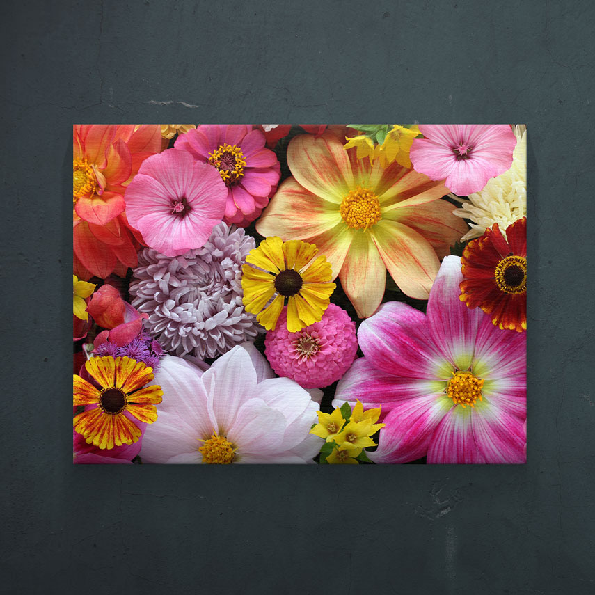 Flori colorate- Pepanza.ro