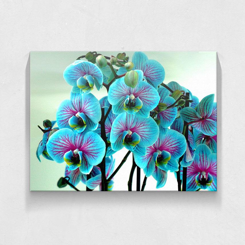 Orhidee albastra- Pepanza.ro