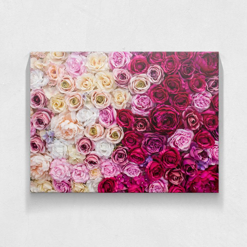 Pink roses- Pepanza.ro