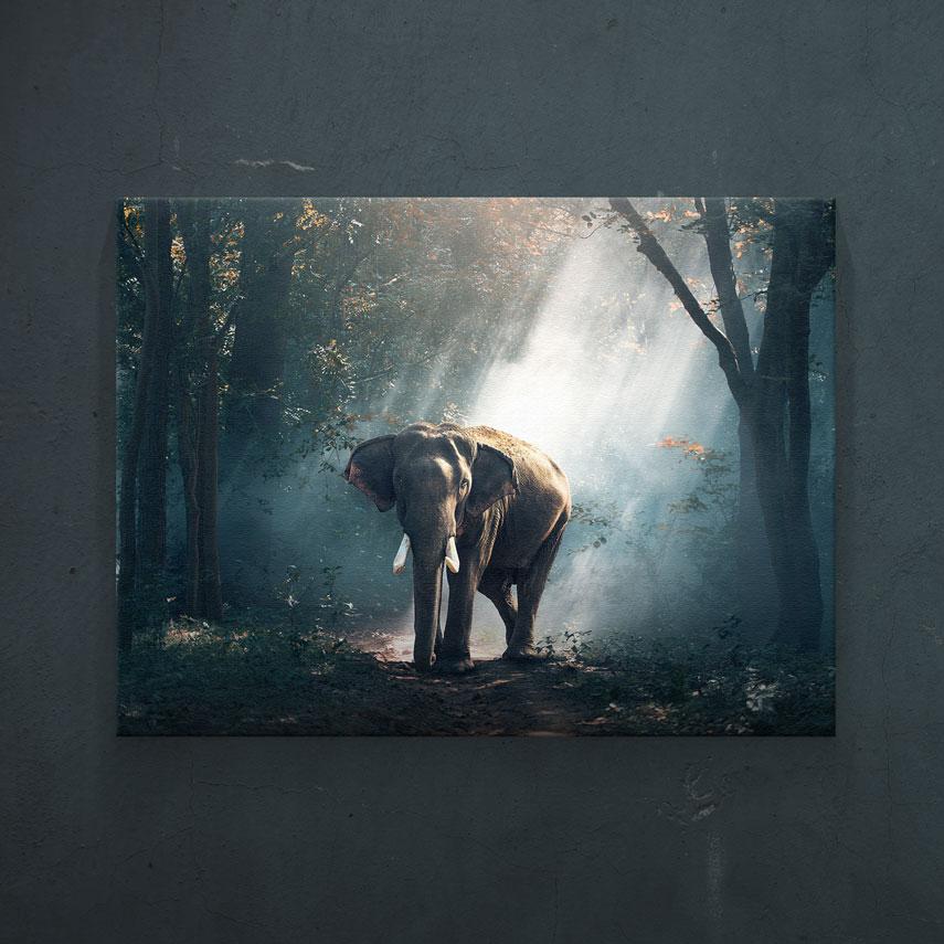 Elefant in natura- Pepanza.ro