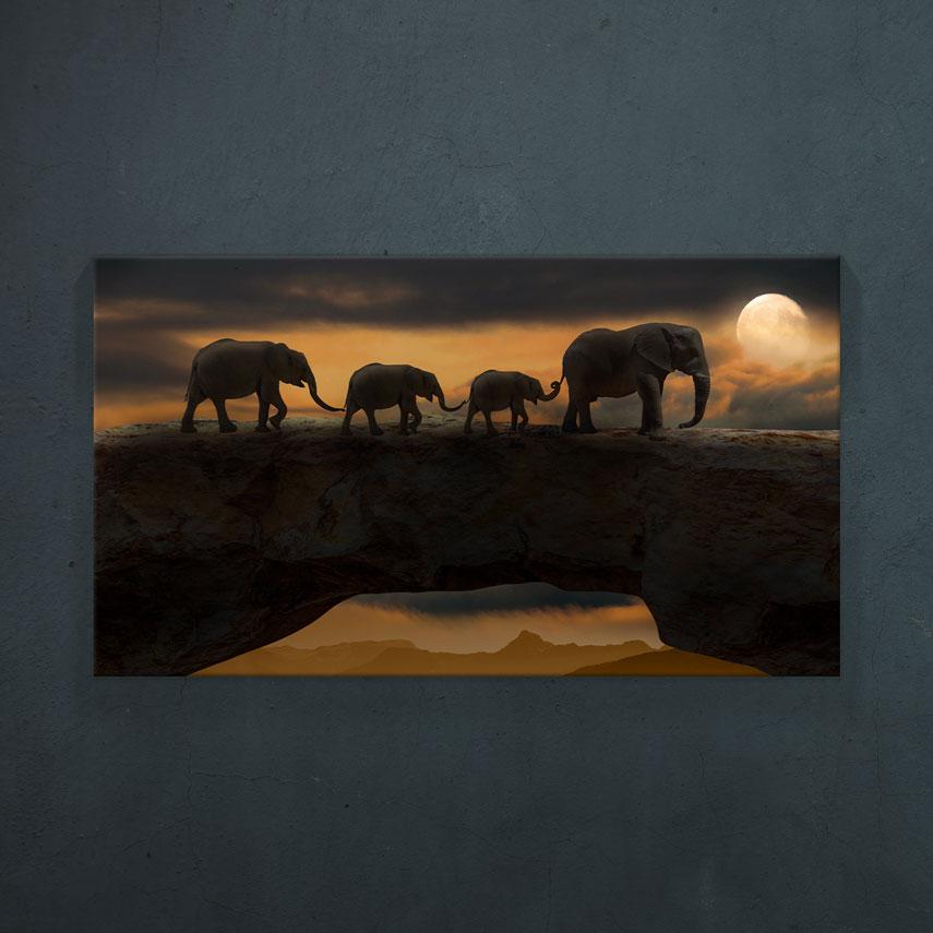 Familie de elefanti- Pepanza.ro