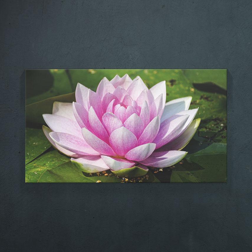 Lotus- Pepanza.ro