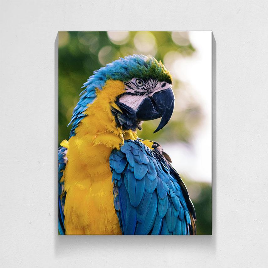 Papagal Colorat- Pepanza.ro