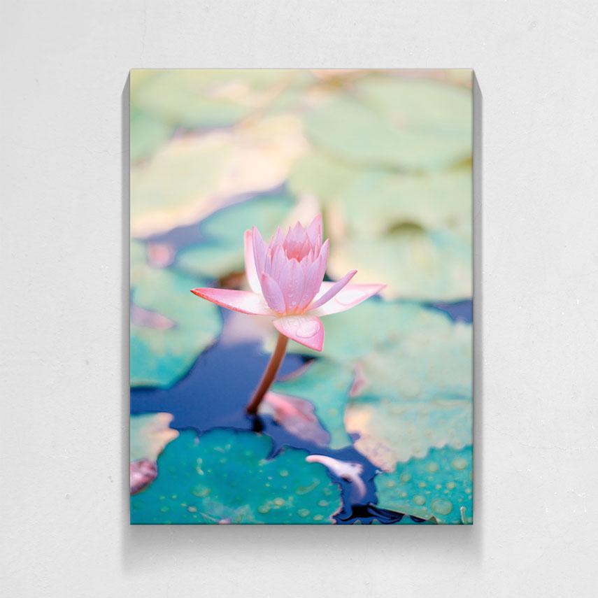 Floare Roz de Lotus- Pepanza.ro