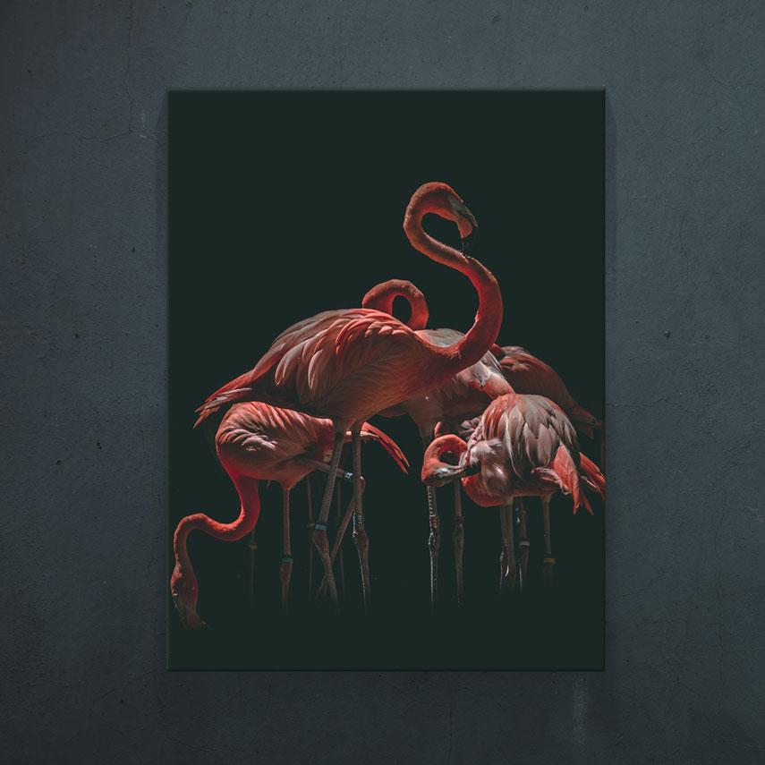 Flamingo Roz- Pepanza.ro