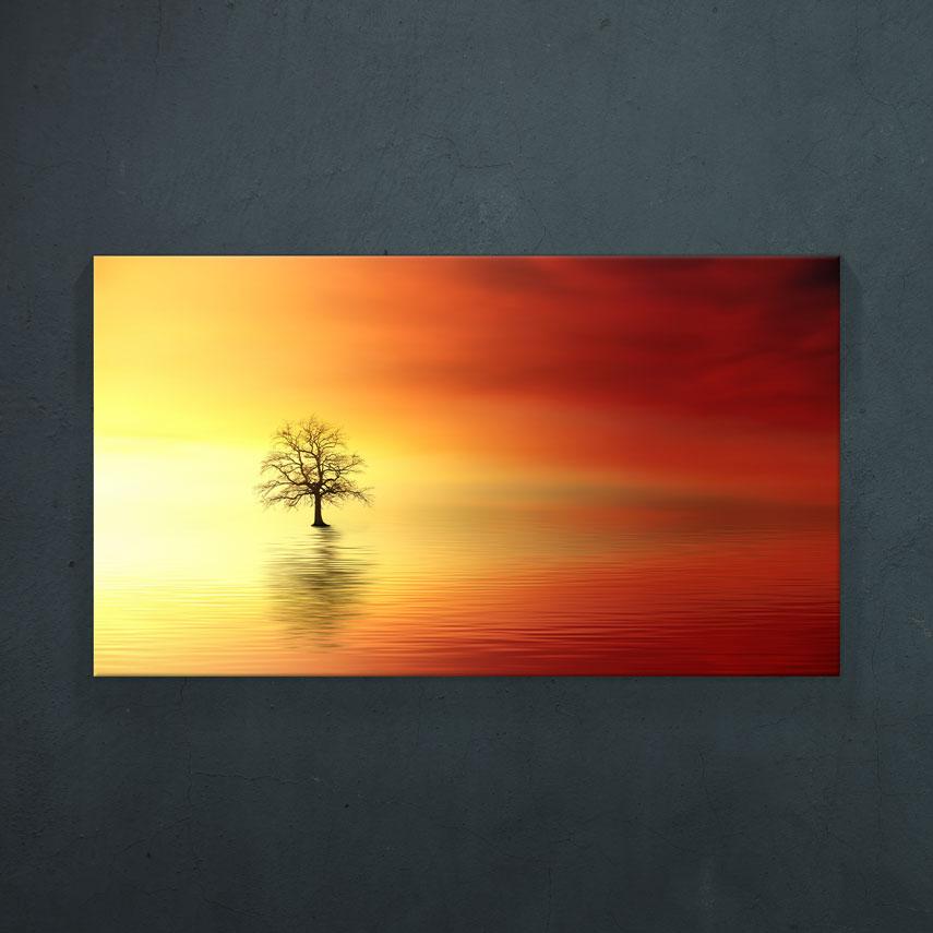 Copac în apă- Pepanza.ro