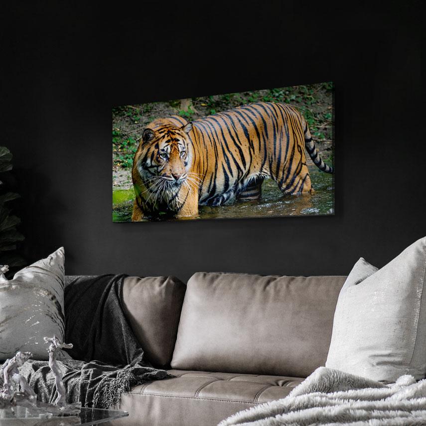 Tablou animale Tigru în apă - Pepanza.ro