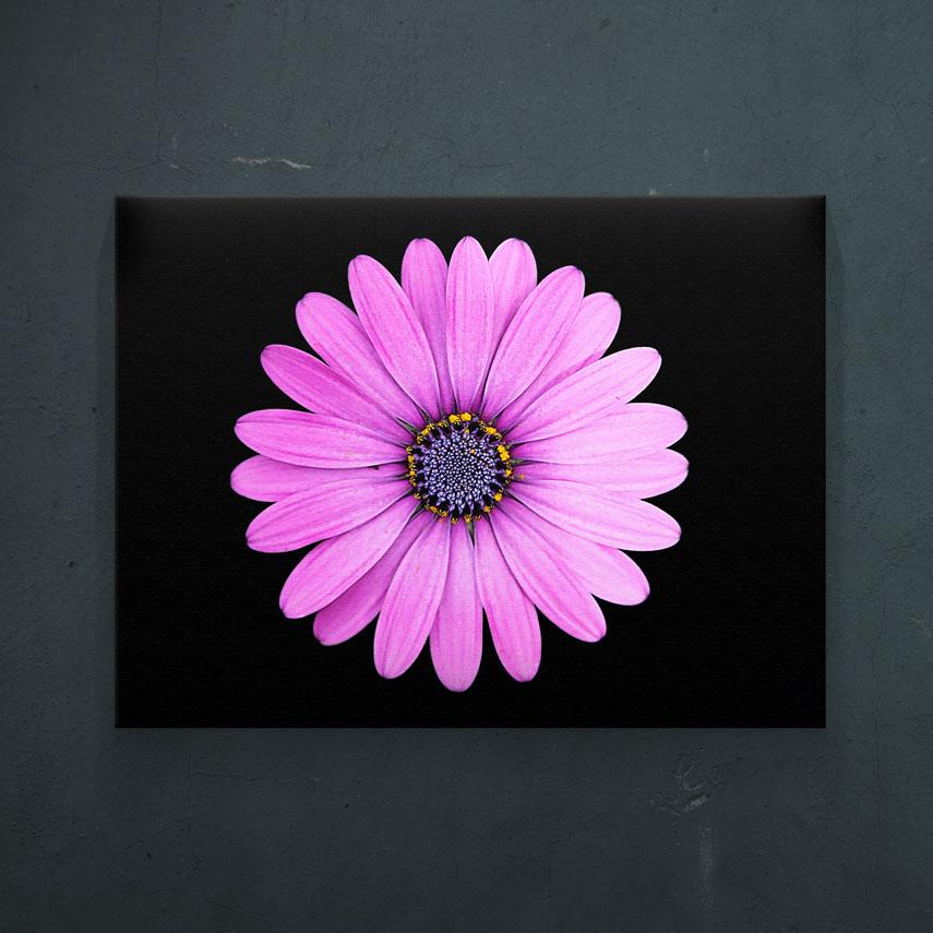 Floare roz- Pepanza.ro