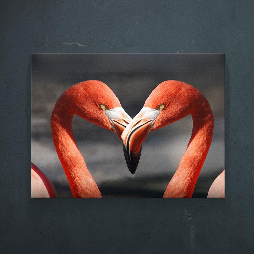 Flamingo love- Pepanza.ro
