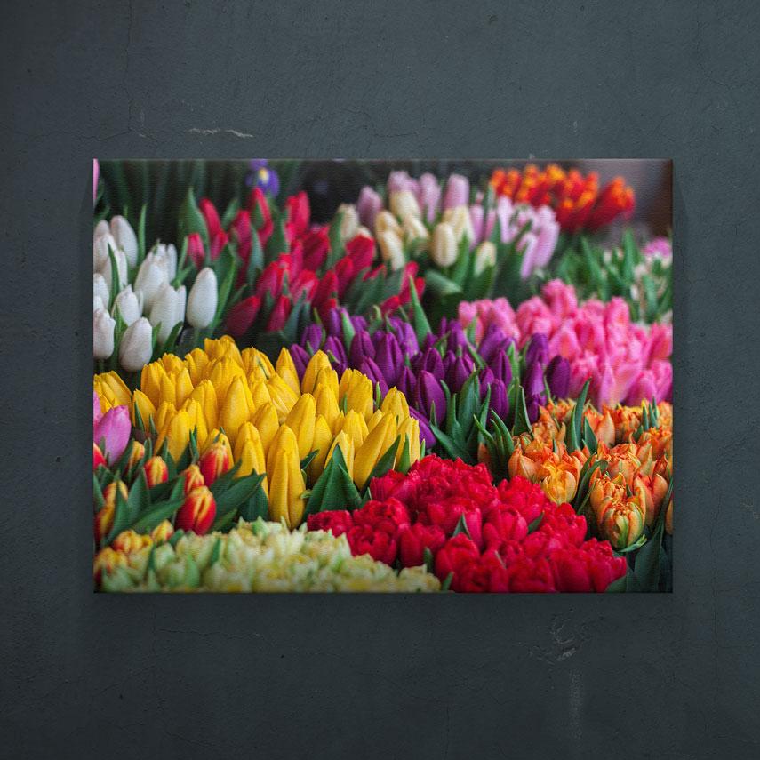 Colored Tulips- Pepanza.ro