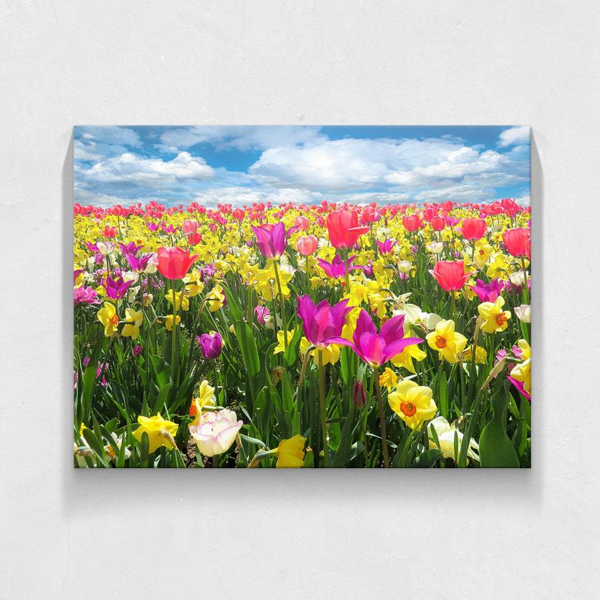 Flori de primăvară- Pepanza.ro