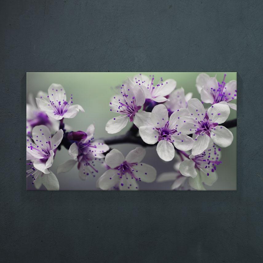 Floare de cires- Pepanza.ro