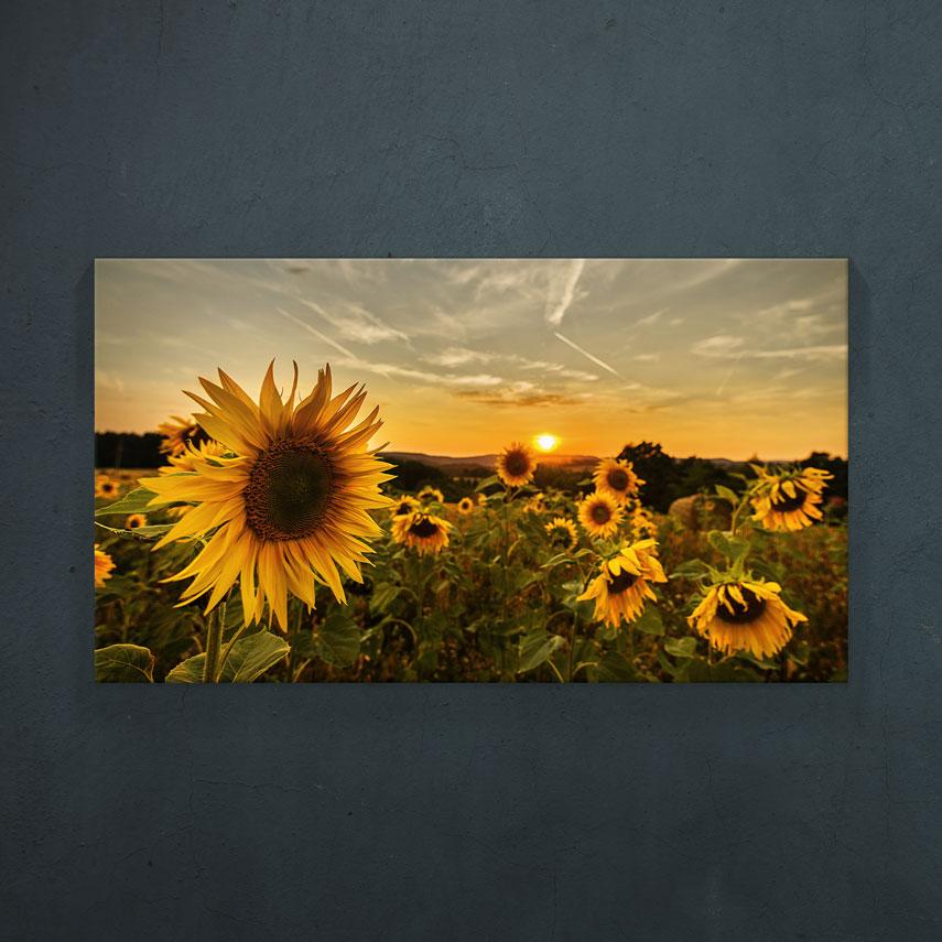 Peisaj floarea soarelui- Pepanza.ro